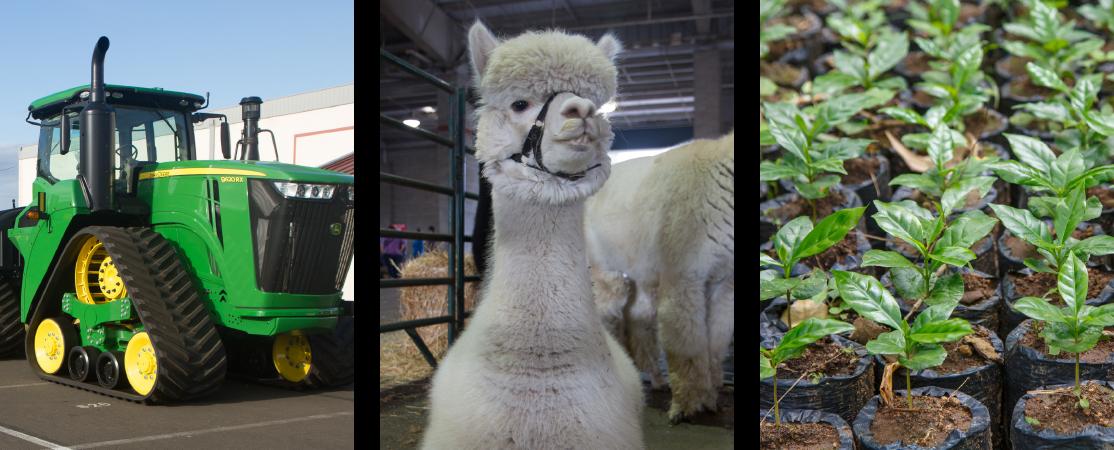 Photograph of farm equipment, llama, seedlings